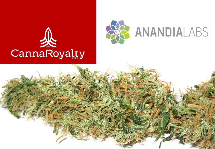 Private Equity Firm CannaRoyalty Acquires Stake in Marijuana Testing Company